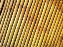 Bambus jest stary Obraz Stock