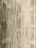 Bambus linii wzór Fotografia Stock