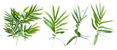 Bambus lokalisiert auf grauem Hintergrund mit Beschneidungspfad lizenzfreie stockbilder