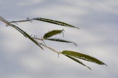 bambus marznący Fotografia Royalty Free