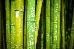 Bambus mit chinesischen Schriftzeichen stockfotos