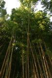 Bambus mit gelbem Kabel Lizenzfreies Stockfoto