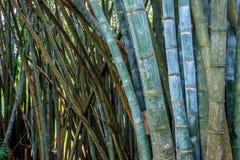 Bambus mit Vandalenskripten in der natürlichen Umwelt Stockbilder