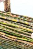 Bambus no mar Fotografia de Stock Royalty Free