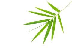 bambus odizolowywający opuszczać biel Zdjęcia Stock
