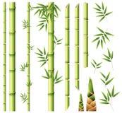 bambus opuszczać trzony ilustracji