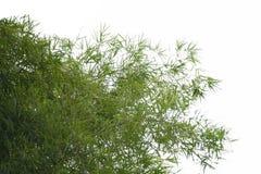 Bambus opuszcza z niebieskiego nieba tłem z pokojem dla kopia teksta lub przestrzeni, obrazy stock