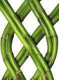 bambus receptorów Zdjęcie Stock