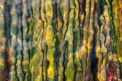 Bambus sob o mar Foto de Stock Royalty Free