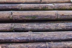 bambus stary Obraz Stock