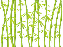 bambus tło ilustracji
