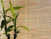 bambus tło fotografia stock