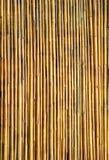 Bambus tekstury ścienny tło Zdjęcie Stock
