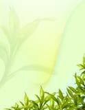 Bambus treibt abstrakter Hintergrund Blätter Lizenzfreie Stockfotos