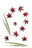 Bambus und Acer-Blätter Stockbilder