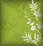Bambus und Blüte Stockbild