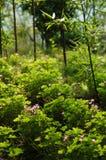 Bambus und Blumen Stockfotografie