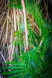 Bambus und Palmen Stockbild