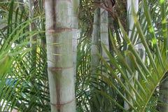 Bambus und Palmen Stockfotografie