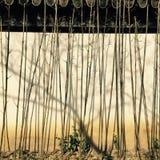 Bambus und Schatten Stockfotos