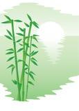 Bambus und Sonne Lizenzfreies Stockfoto