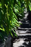 Bambus verlässt auf dem Hintergrund eines Weges stockfoto
