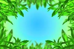 Bambus verlässt Rand Lizenzfreies Stockfoto