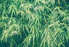 Bambus verl?sst Hintergrund lizenzfreie stockbilder