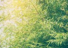Bambus verl?sst Hintergrund stockfotos