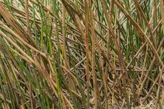 Bambus wählen Sie haftet oben aus stockfotos