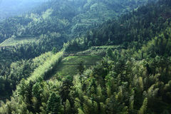 Bambus w górze Zdjęcie Royalty Free