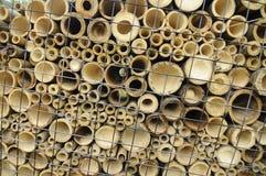 Bambus w różnorodnych rozmiarach ciących horizontally Obraz Royalty Free