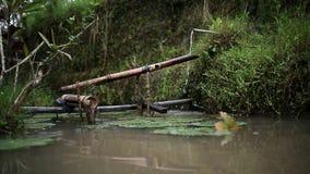 Bambus wody tubka zbiory