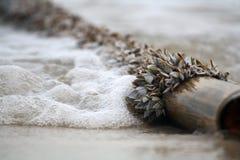 Bambus z denną skorupą na plaży Obrazy Royalty Free