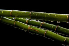 Bambus z kroplami Zdjęcia Stock
