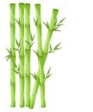 Bambus z liść ilustracją Azjatycki bambu zen zasadza tło Zdjęcie Stock