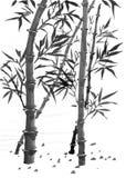 Bambus z liśćmi Fotografia Royalty Free