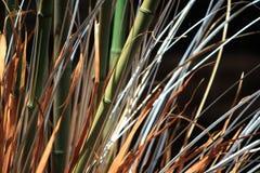 bambus zieleń Zdjęcia Stock