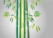 Bambus, Zielony bambusowy wektorowy ilustracyjny biały tło Fotografia Stock