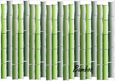 Bambus, Zielony bambusowy wektorowy ilustracyjny biały tło Obraz Stock