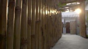 Bambusa ścienny zbliżenie zdjęcie wideo
