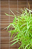 Bambusa arundinacea Willd and bamboo background Royalty Free Stock Image
