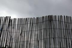 Bambusa ekran Zdjęcia Stock