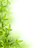 Bambusa i zieleni liście, tło Zdjęcie Royalty Free