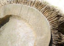 Bambusa korzeń Obrazy Royalty Free