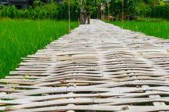 Bambusa most dla spaceru w Rice polu obrazy stock