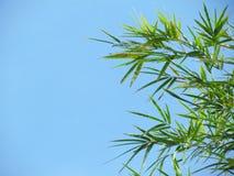 Bambusa niebieskie niebo i liście Zdjęcie Stock