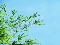 Bambusa niebieskie niebo i liście Fotografia Stock