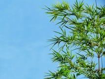 Bambusa niebieskie niebo i liście Obrazy Stock