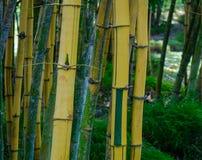 Bambusa ogród w wiosna czasie obrazy royalty free